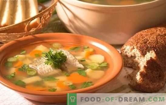 De baarsoep is thuis een heerlijke soep. Hoe een oor van een baars te bereiden: geheimen, recepten, tips