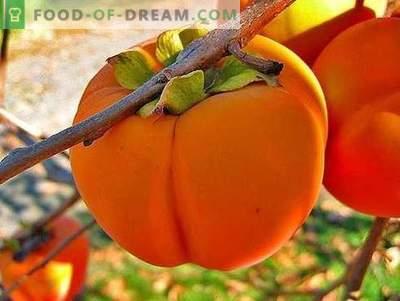 Persimmon - beschrijving, nuttige eigenschappen, gebruik bij het koken. Recepten met persimmon.