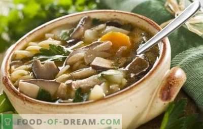Mushroom champignon soep - eenvoudig en eenvoudig! Recepten van paddestoelen champignon soep met kip, boekweit, pasta en kaas