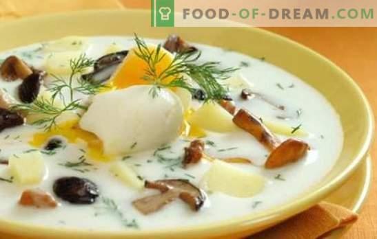 Champignonsoep - het is eenvoudig en handig! De gemakkelijkste recepten voor soep gemaakt van champignons: met vlees, granen, potten, augurk en ratjetoe