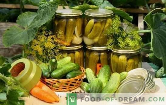 De lekkerste komkommers voor de winter: raad eens wie? We verrassen familie en gasten met heerlijke komkommers: populaire en ongebruikelijke recepten