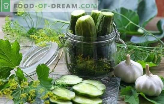 Sterilisatie van komkommers voor de winter in banken - de evolutie van het inblikken. Recepten en geheimen