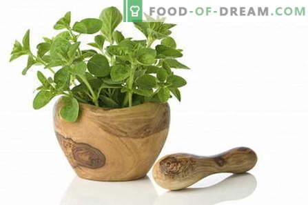 Oregano - beschrijving, eigenschappen, gebruik bij het koken. Recepten met oregano.
