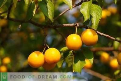 Cherry pruimenwijn